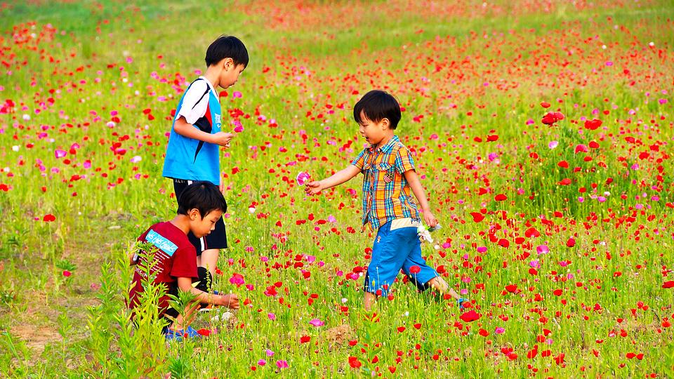 Flowers, Gunsan